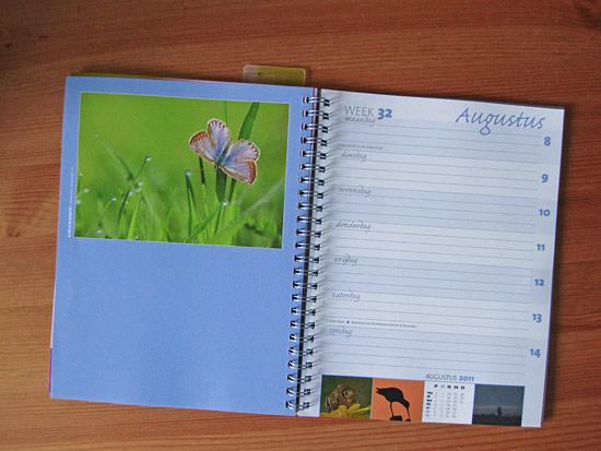 foto van een icarusblauwtje door Johannes Klapwijk in de grasduinen agenda