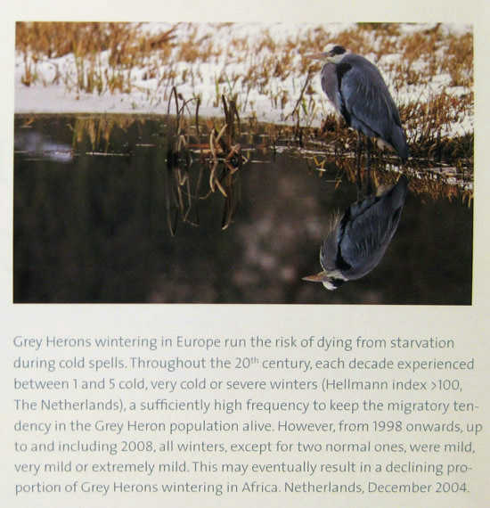 Mijn foto van een blauwe reiger in living on the edge.
