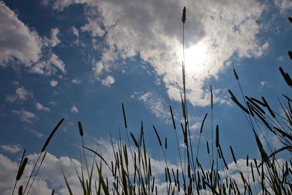 Grassen op Schokland voor het thema jong-en-dynamisch