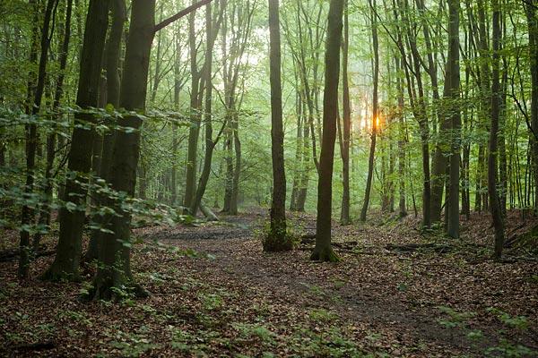 Urkerbos - een stuk beukenbos met het eerste zonnetje