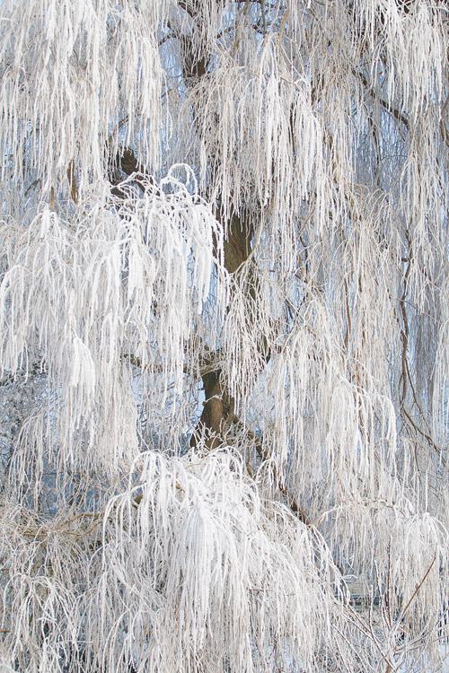 Treurberk bedekt met rijp