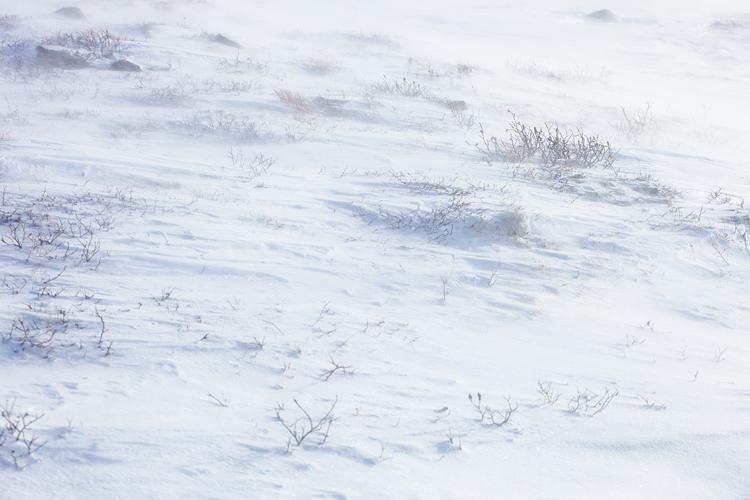 Stuifsneeuw in winters Dovrefjell
