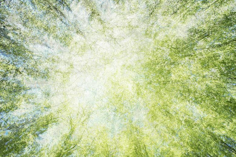 Voorjaarsimpressie met meervoudige belichting in fris groen beukenbos.