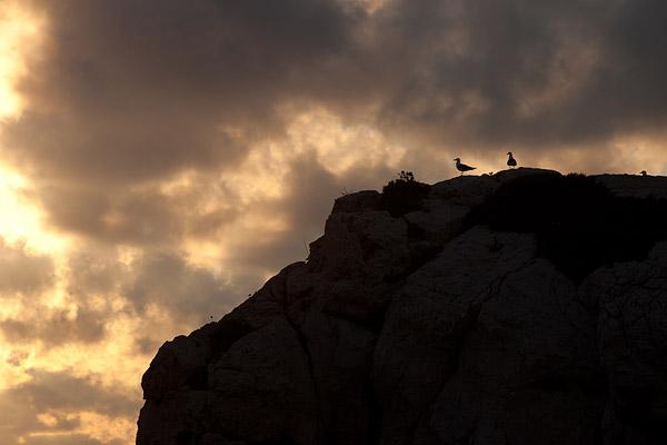 Geelpootmeeuwen (Larus michahellis) op Cappo Caccia bij zonsondergang