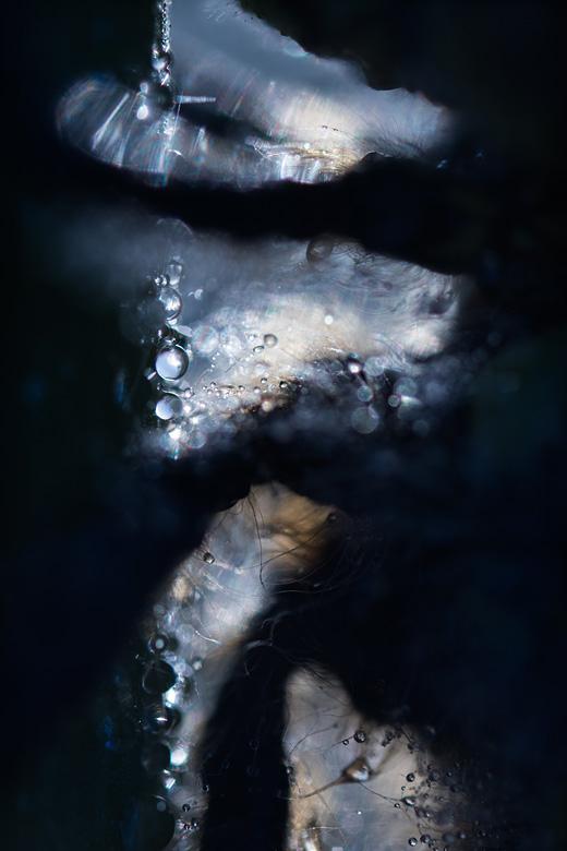 Glassnijder (Brachytron pratense) abstract met dauwdruppels.