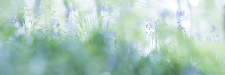 Wilde hyacinten ( Hyacinthoides non-scripta) in een panorama tussen de varens aquarel.