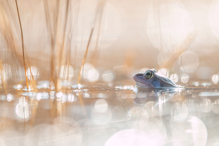 Commended IGPOTY - Frog prince