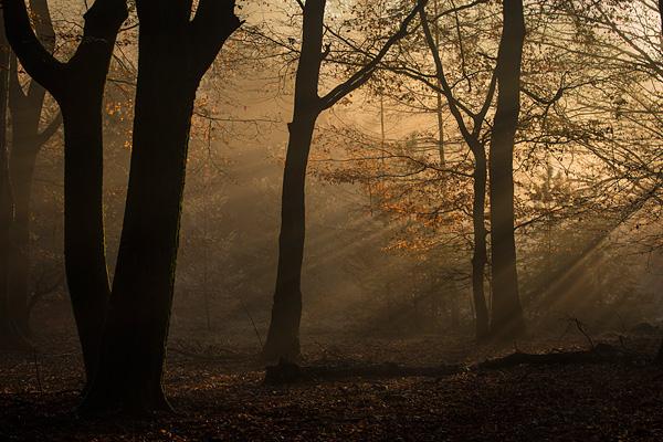 Zonsopkomst en warm zonlicht in het Speulderbos tijdens de prachtige herfst periode