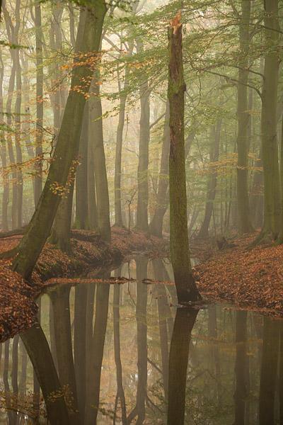 Herfstlandschap langs de Leuvenumse beek