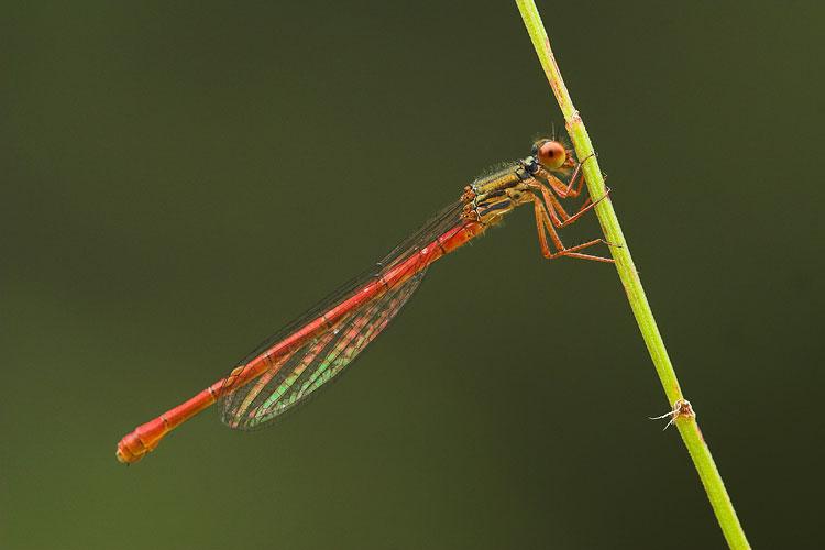 Regenboog vleugels