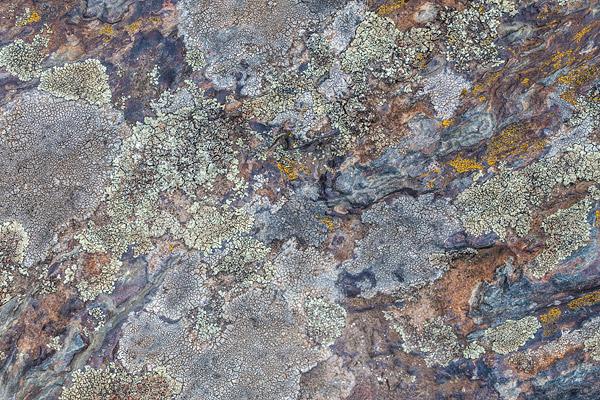 Korstmossen op de rotsen langs de Gard