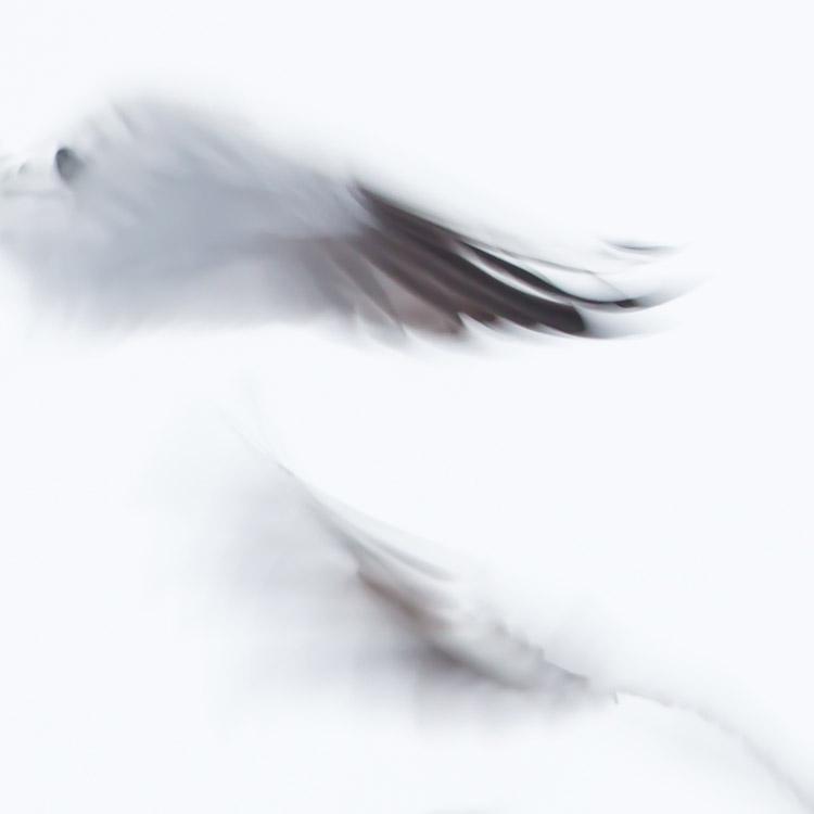 Meeuwenvleugels abstract