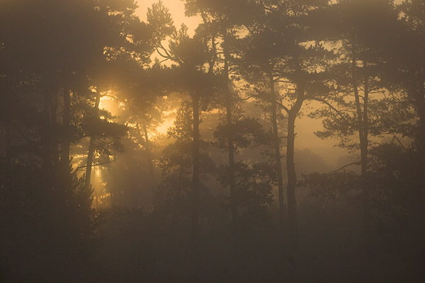 De zon door de bomen op een mistige ochtend