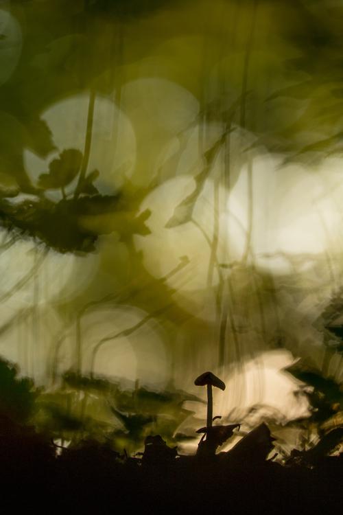 Paddenstoeltje tussen bokeh van planten