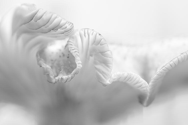 Honingzwam in high-key gefotografeerd