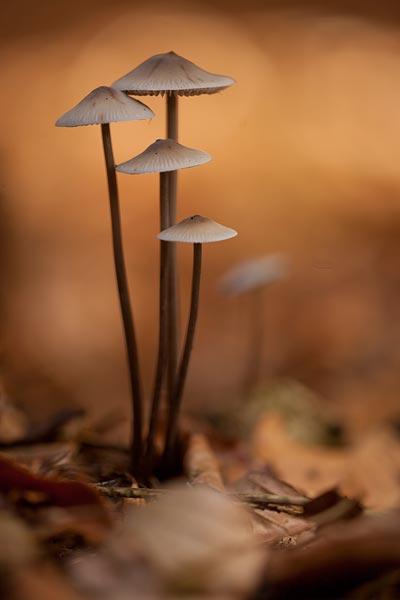 Groepje paddenstoelen