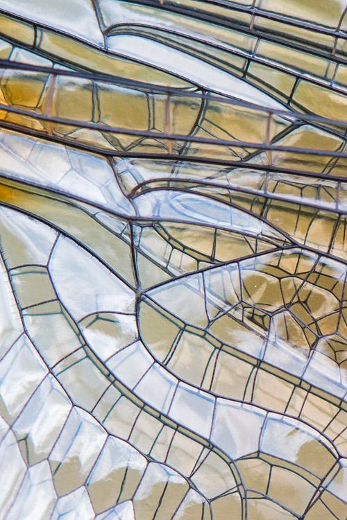 Glas-in-lood: close-up van de vleugel van een Smaragdlibel (Cordulia aenea)