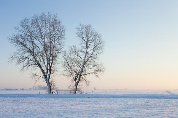 Een winters landschap met sneeuw en een opkomende zon.