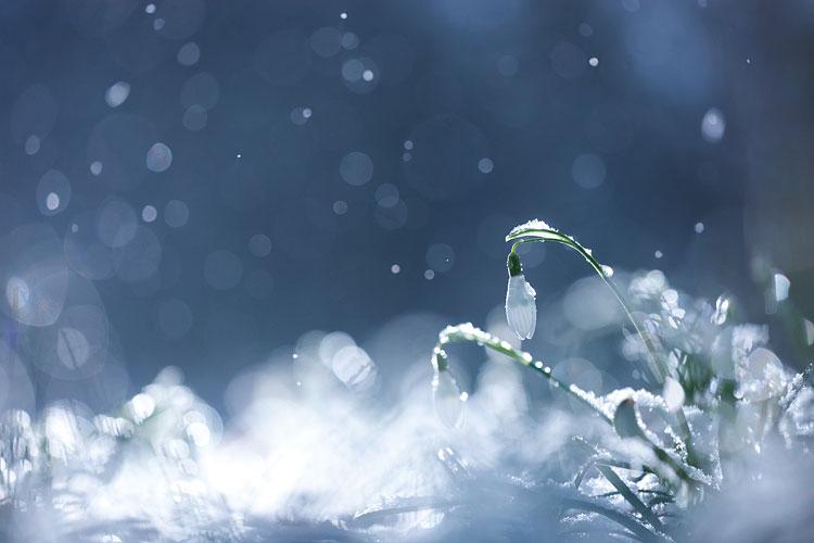 Sneeuwklokjes tijdens een sneeuwbui