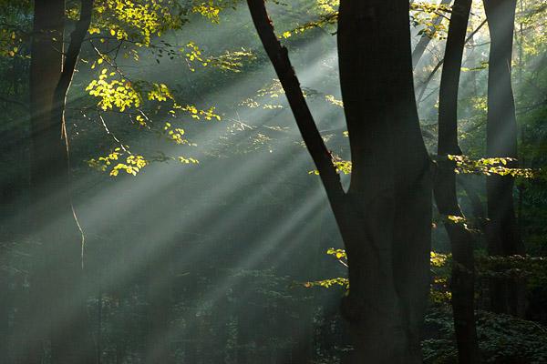 Stralen in de mist in het bos.