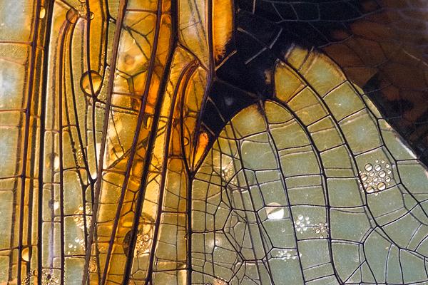 Close-up van de vleugels van een tweevlek (Epitheca bimaculata)