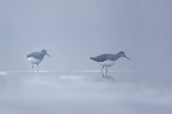 Witgatjes gefotografeerd vanuit de drijvende schuilhut