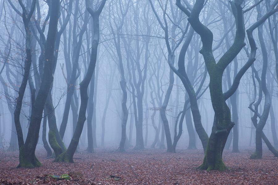 Beukenbos in de mist