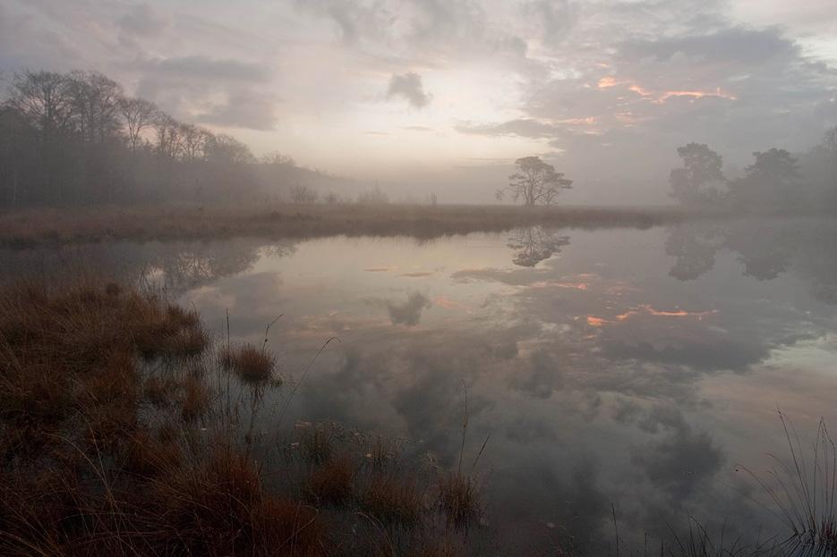 Kootwijkerveen voor zonsopkomst