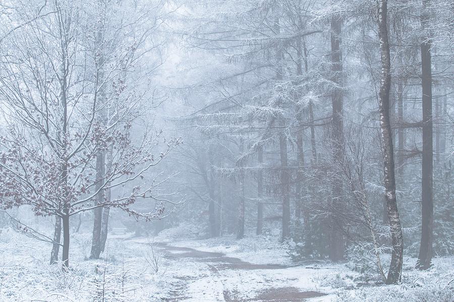Sneeuw op de Sallandse Heuvelrug