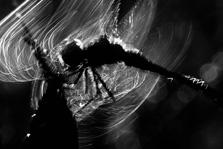 Heidelibel in beweging