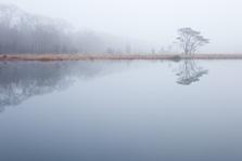Kootwijkerveen in de mist
