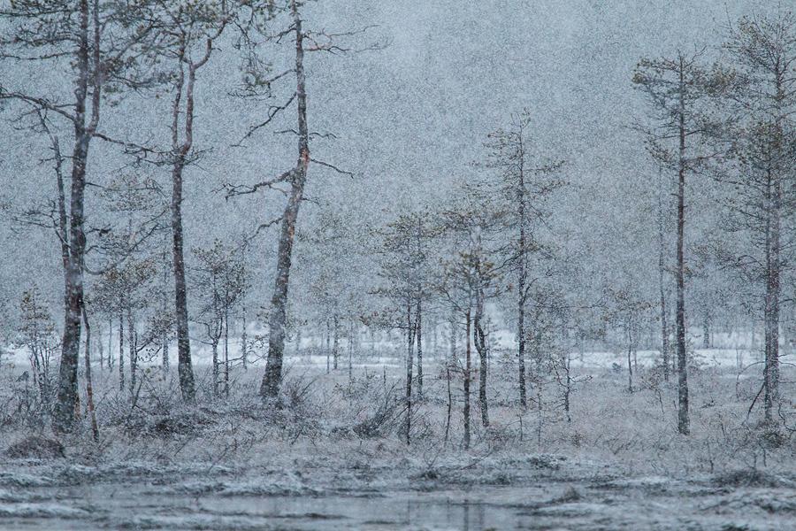Zware sneeuwbui in het Zweedse voorjaar