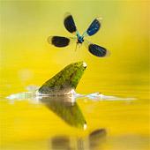 3e prijs in de International Garden Photographer of the Year!