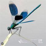 Mijn foto op de cover van de nieuwe veldgids libellen