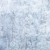 Koning winter deeltje 2: rijp