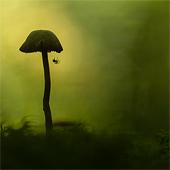 Mysterieuze paddenstoelenwereld