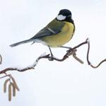 Vogels op de voedertafel
