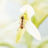 Nachtorchissen: de bruid onder de orchideeën
