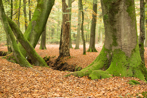 Herfstlandschap gefotografeerd door Ton Winkel