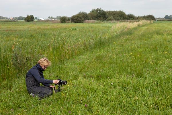 Workshop macrofotografie in de Wieden