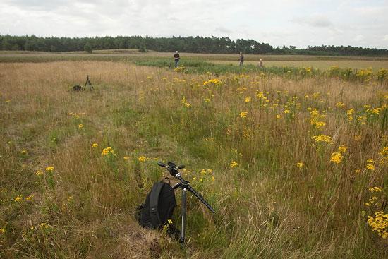 Indruk van mijn workshop vlinders fotograferen op de Hoge Veluwe.