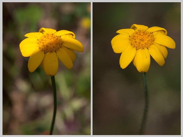 Voorbeeld verschil tussen focus-stacking of klein diafragma